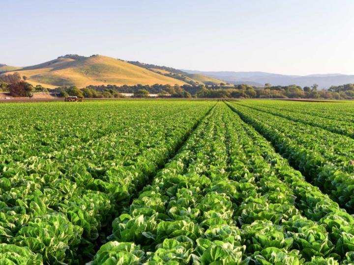 L'Agriculture Végane pourrait être La Philosophie Agricole dont Le Monde a besoin – GREEN QUEEN 24.12.2020